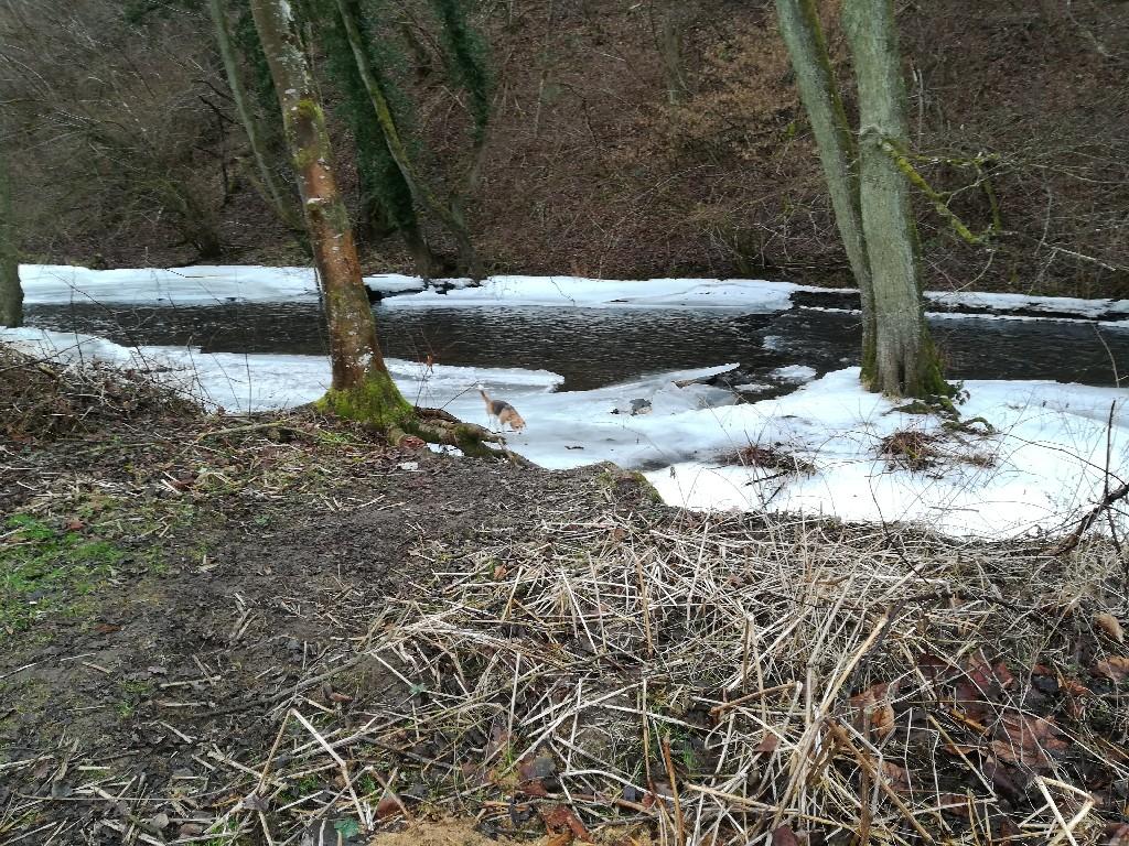 Die Ruwer in Waldrach - Fast ganz zugefroren