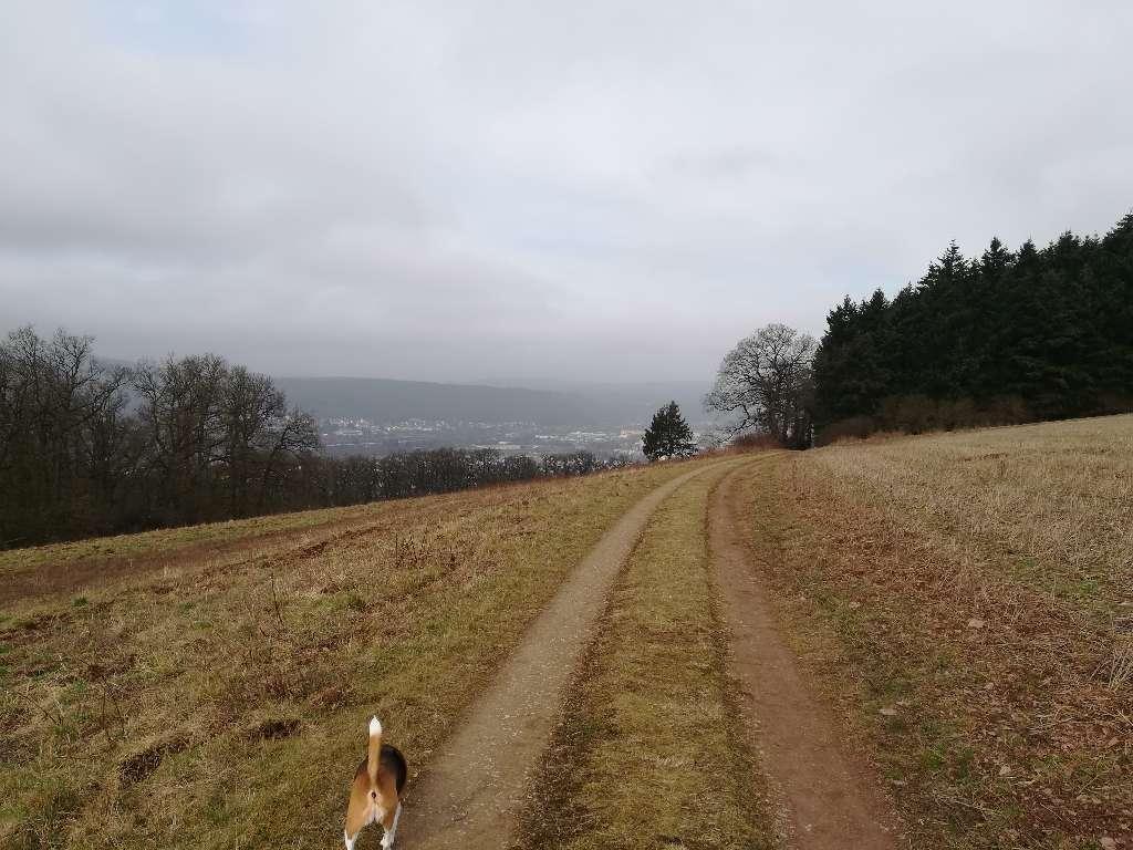 Hier hat man einen guten Ausblick auf Pfalzel, Biewer und Ehrang