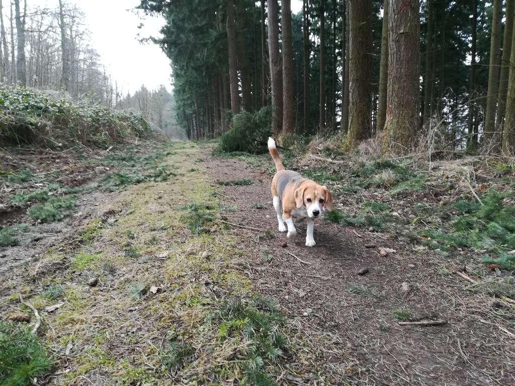 Emma mag die Runde auf dem Grüneberg sehr
