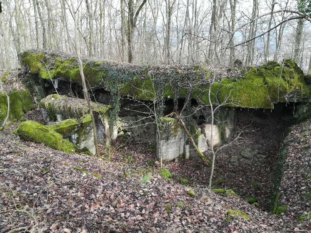 Auf dem Grüneberg finden wir einige alte Bunker