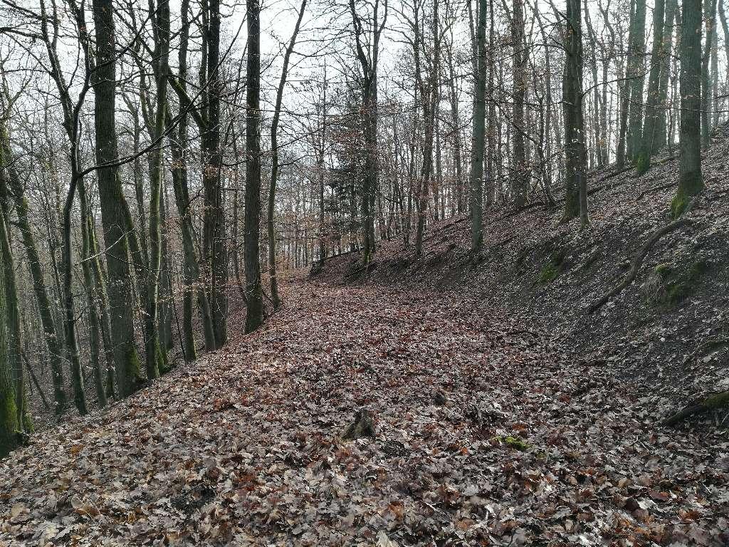 Die Waldwege werden immer wilder