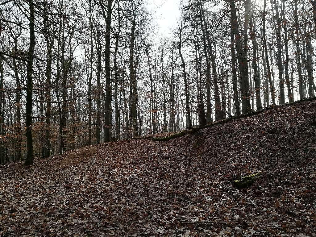 Ein umgefallener Baum auf dem Waldweg auf dem Grüneberg