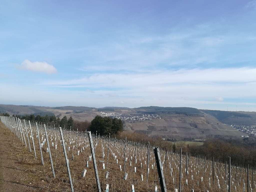 Ein Blick auf die Weinberge von Mertesdorf und Kasel
