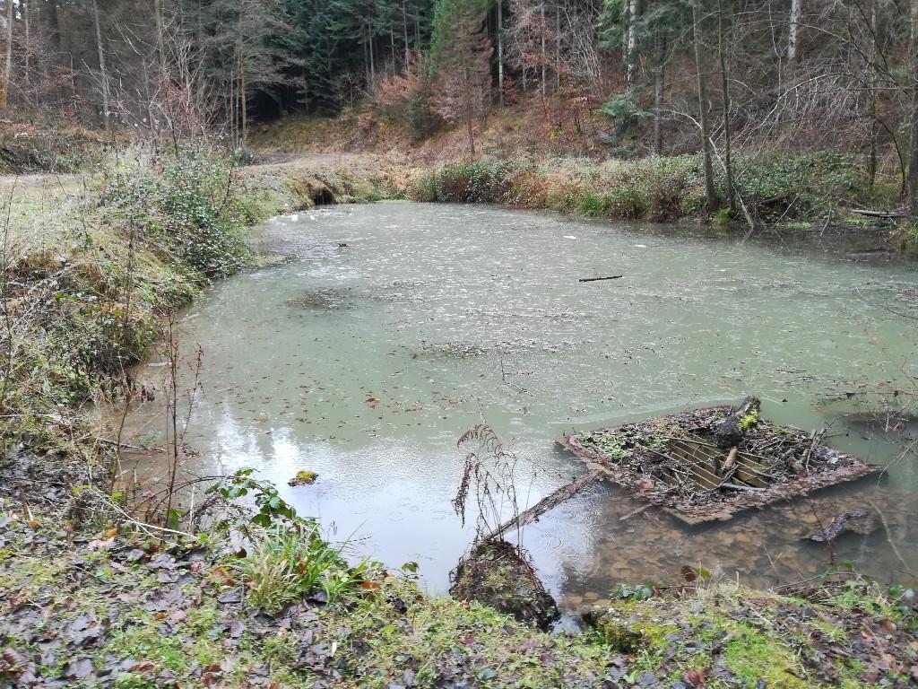 Ein Auffangbecken am Parkbach bei Kasel