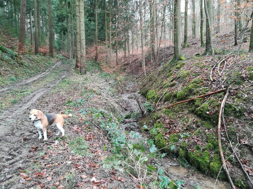 Emma mitten im Wald