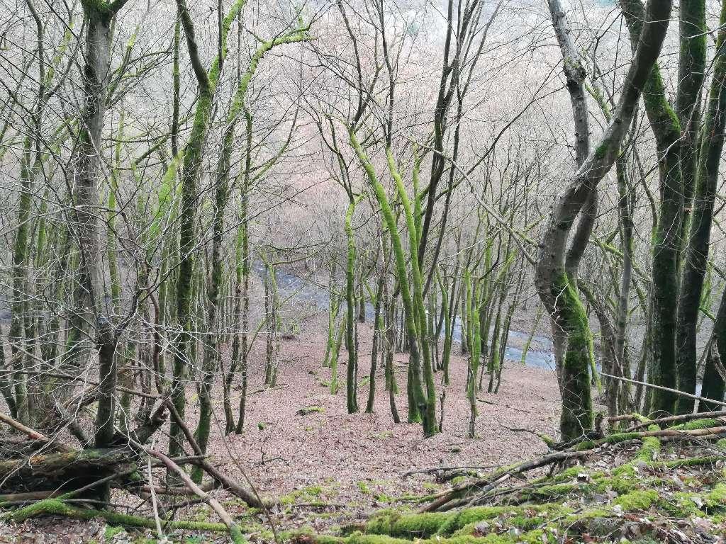 Die Riveris liegt weit unterhalb vom Weg