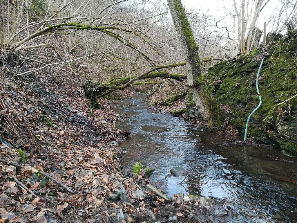 Der Bachlauf der Riveris