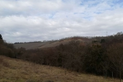 Blick auf die Weinberge von Waldrach