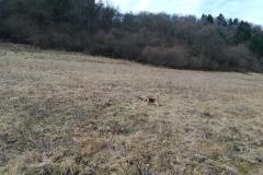 Hier gibt es Wiesen zum Toben für die Hunde