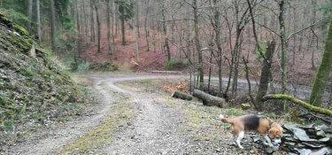 Kasel -Weggabelung im Wald am Parkbach