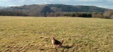 Eine Wiese auf dem Berg oberhalb von Waldrach