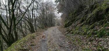 Ein Waldweg bei Riveris im Ruwertal